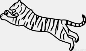 Bocetos de Tigres