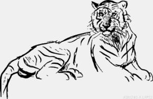 Como dibujar un tigre para niños