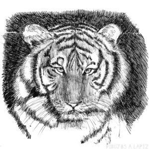 Fotos tigres