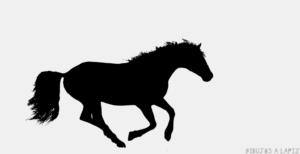 Imagenes de caballos para colorear