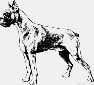 Perro para pintar