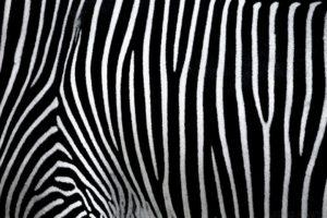 Pinturas Cebra