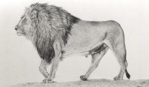 animales dibujados a lapiz
