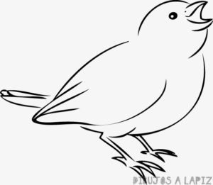 aves animadas