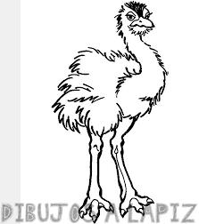 avestruz colorear