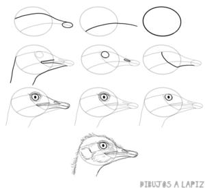 avestruz para pintar