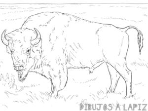 bufalo fotos