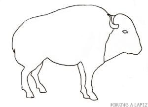 bufalo imagen