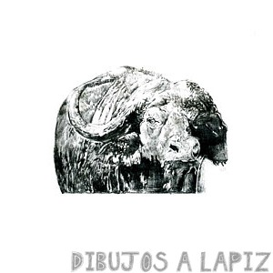 bufalo para colorear