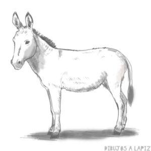 burro para pintar