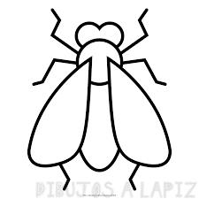 cómo dibujar una mosca
