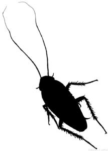 cómo se dibuja una cucaracha