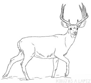 cabeza de venado dibujo