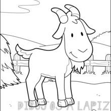 cabra para dibujar