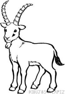 cabras dibujos