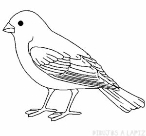 canario dibujo