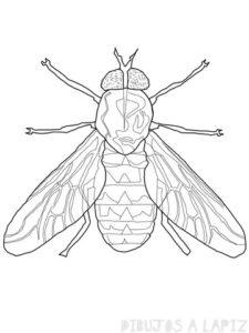 caricatura mosca