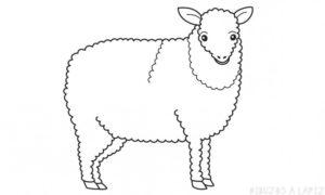 caricaturas de ovejas