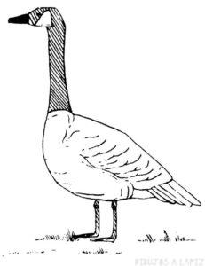 cisne dibujo