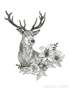 como dibujar ciervos