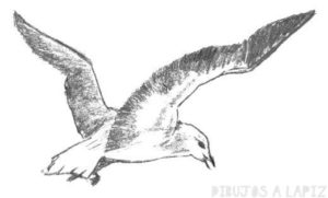 como dibujar gaviotas