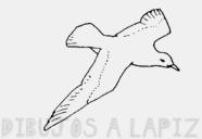 como dibujar gaviotas volando