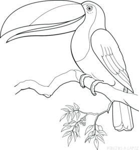 como dibujar tucan