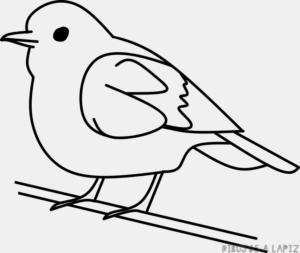 como dibujar un ave
