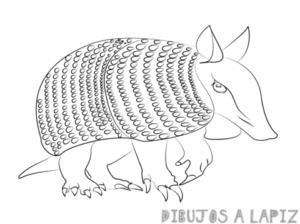 como dibujar un cusuco
