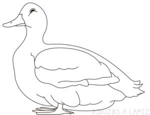 como dibujar un pato