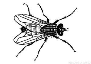 como dibujar una mosca para niños