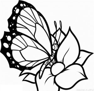 como pintar una mariposa