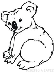 como se dibuja un koala