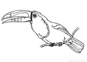 como se pinta un tucan
