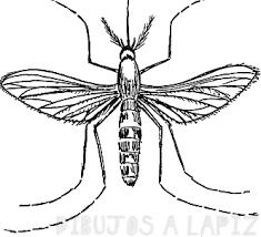 cual es el mosquito del dengue