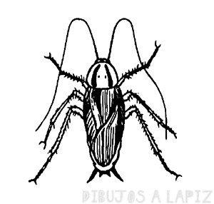 cucaracha en dibujo