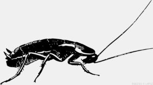 cucarachas imagenes