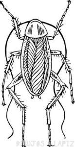 cucarachas para calcar