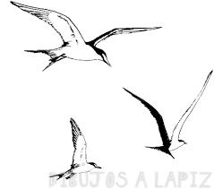 dibujar una gaviota