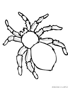 dibujo araña halloween