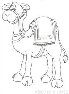 dibujo de camello para niños