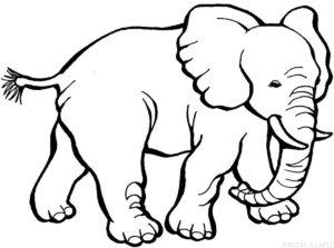 dibujo de elefante para niños