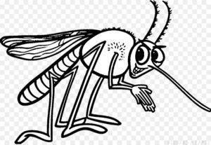 dibujo del mosquito del dengue