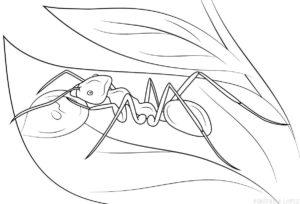 dibujo hormiga infantil