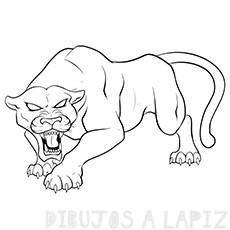 dibujo pantera negra
