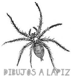 dibujos de arañas faciles