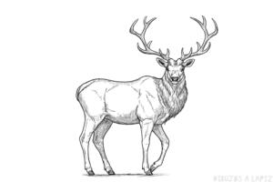 dibujos de ciervos faciles