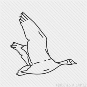dibujos de cisnes para dibujar
