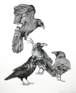 dibujos de cuervos de san lorenzo