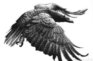 dibujos de cuervos para niños